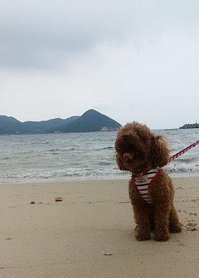 プーちゃん海へ行く!