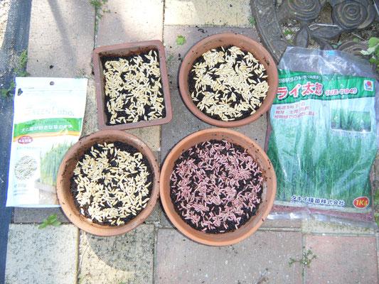 種を蒔いた状態の写真