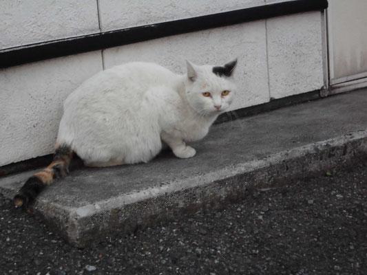 コンビニの猫2 の写真
