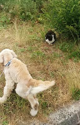 大吉、猫ちゃん見つけた!