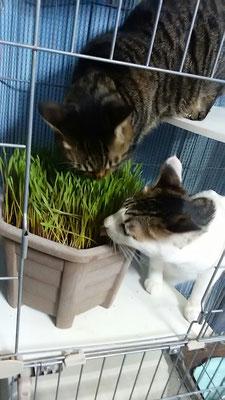 猫草ララ&福