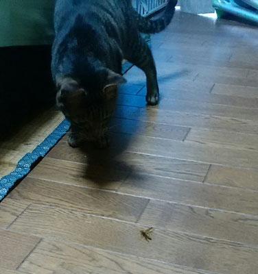 ニャンジロウ、蜂を落とす!