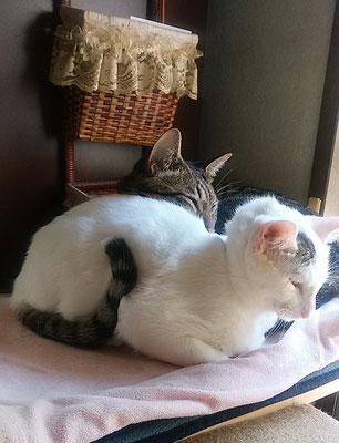 二匹仲良くおやすみなさい!