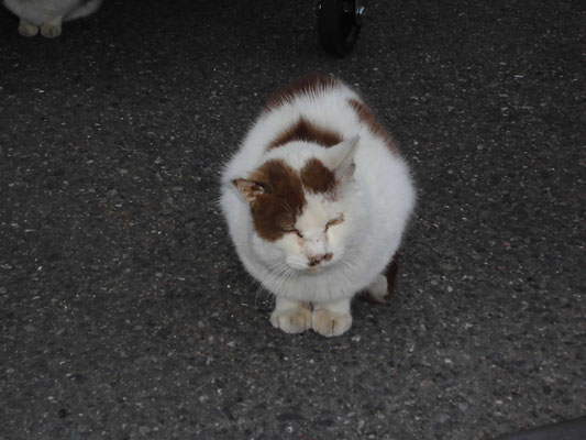 コンビニの猫1 の写真