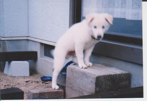 子犬の海清丸の写真