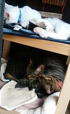4兄弟二段ベットでお昼寝中
