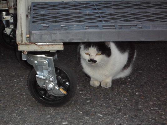 コンビニの猫3 の写真