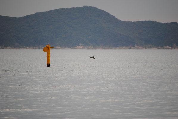 並び松海水浴場 沖の写真