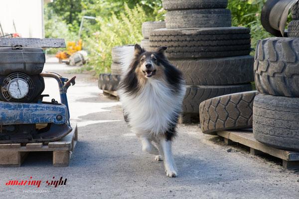 Hund, Rettung, Portrait, Fotograf, Stuttgart