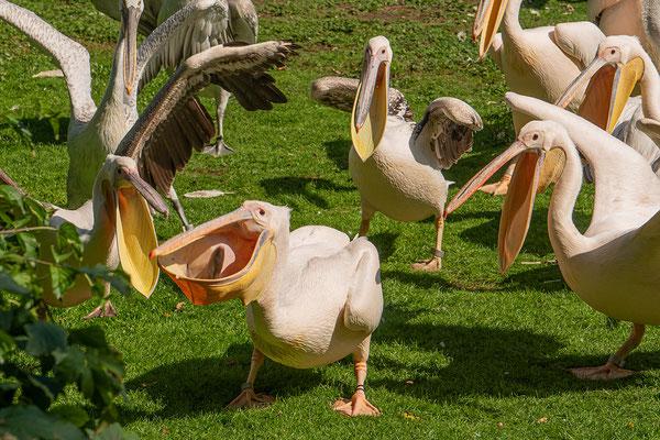 Fütterung der Wasservögel
