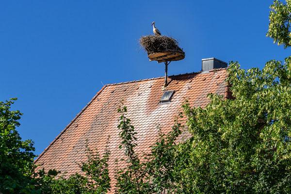 Störche in Diespeck, Pfarrhaus
