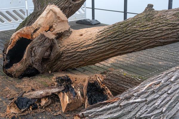 Mein Freund der Baum ist tot, er starb im Abendrot. Sinnloser Vandalismus von Individuen die grundlos fremdes Eigentum beschädigen bzw. zerstören.