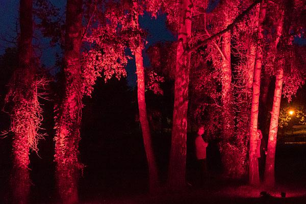 Mystisches Licht unter Bäumen