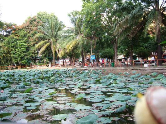ベトナムの国花はハスです