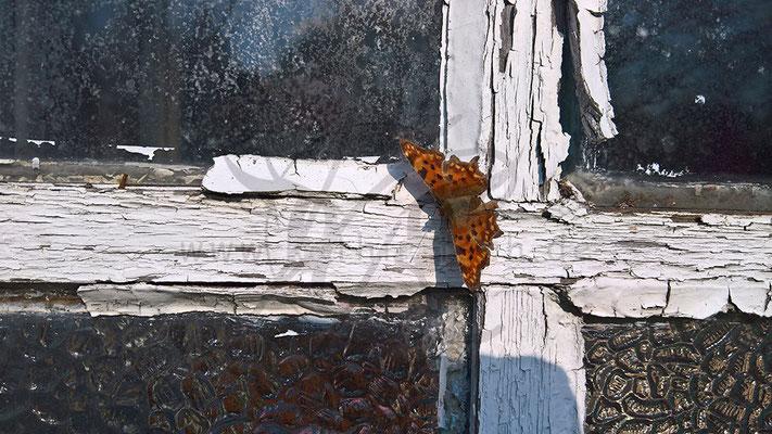 Schmetterling als Zierde