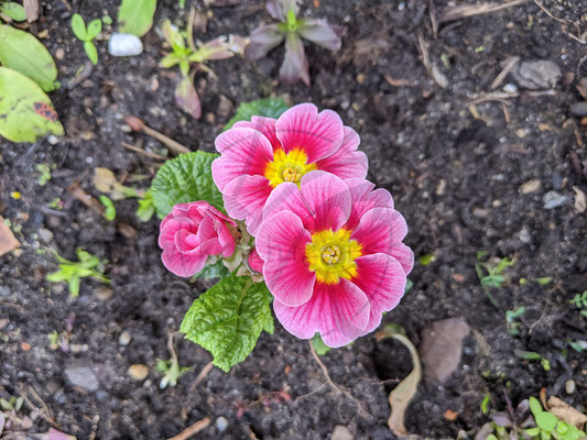 Blumen-Prinzessinnen