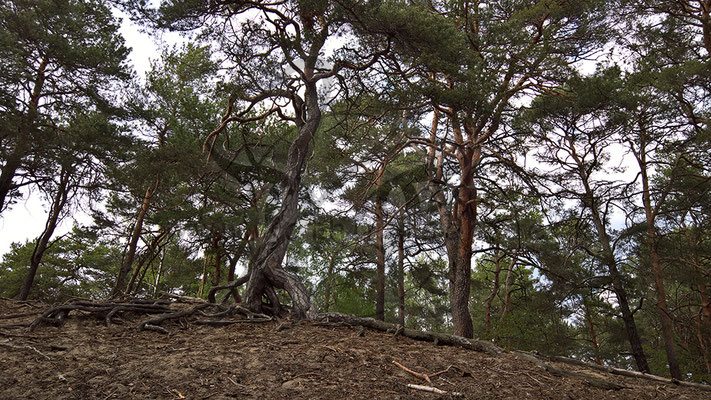 Sperriger Baum