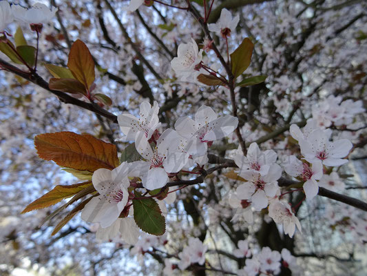 Frühling bis Winter