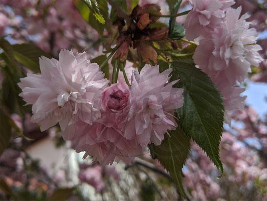 Herz aus Blüten