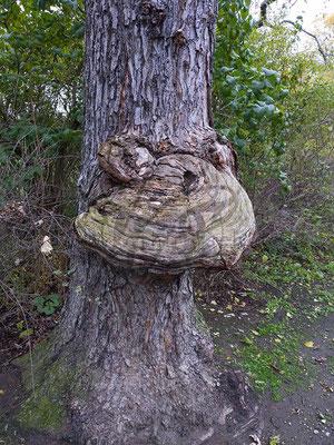 Holz-Frosch