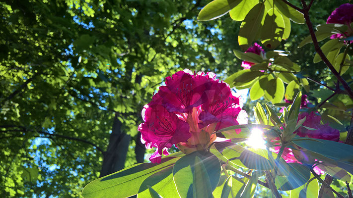 Bestrahlte Blume