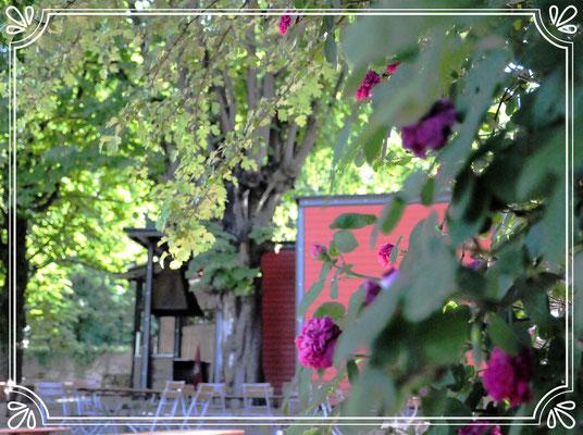 Blütenduft im Riegeler Biergarten
