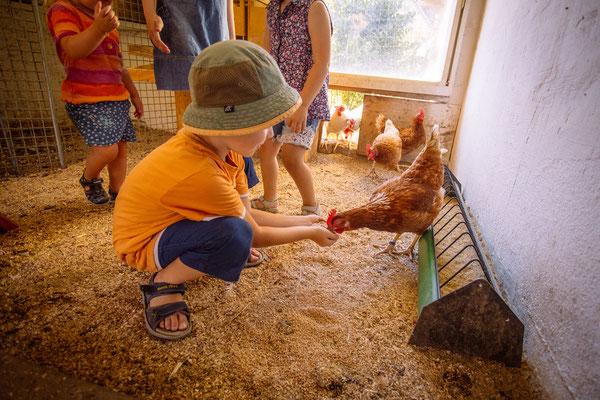 Bei den Hühnern täglich Eier holen.