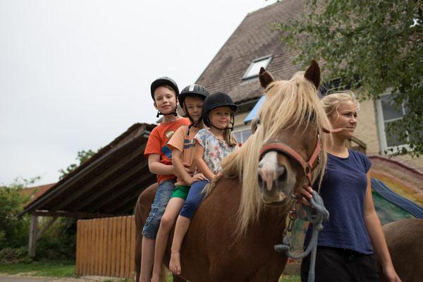 Speziell für Kids: täglich geführtes Reiten