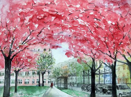 Kirschblüten am Hanseplatz - 2015 - Aquarell - 30x40