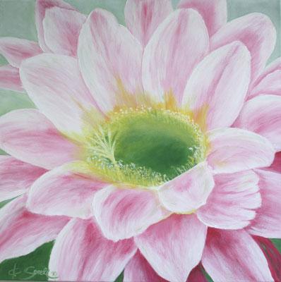 Kaktusblüte - 2010 - Acryl auf Leinwand - 60x60