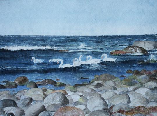 Ostseeschwäne - 2005 - Aquarell Bütten - 40x60