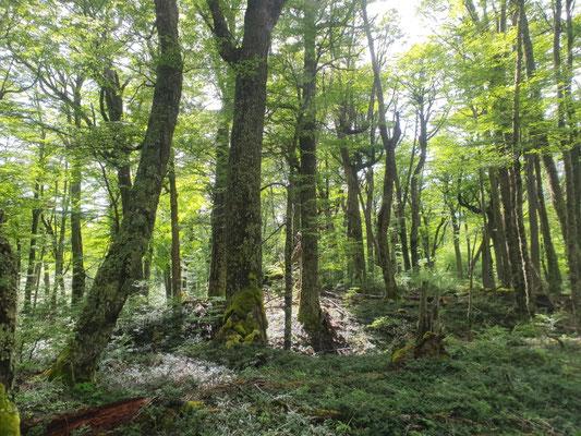 Urwald - Wahnsinn! Aufstieg nach Perros nach einem Ruhetag in Dickson