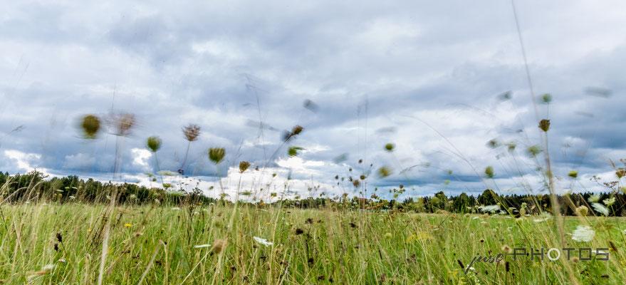 Unwetter zieht auf, Wind bewegt die Gräser