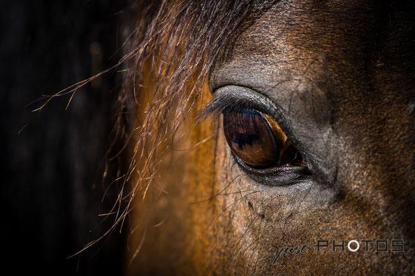 Pferdeauge - Nahaufnahme