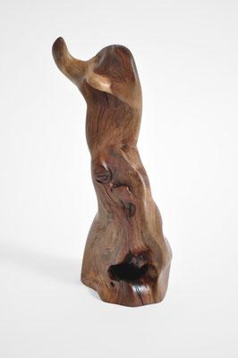 S1399 · Trop.Driftwood