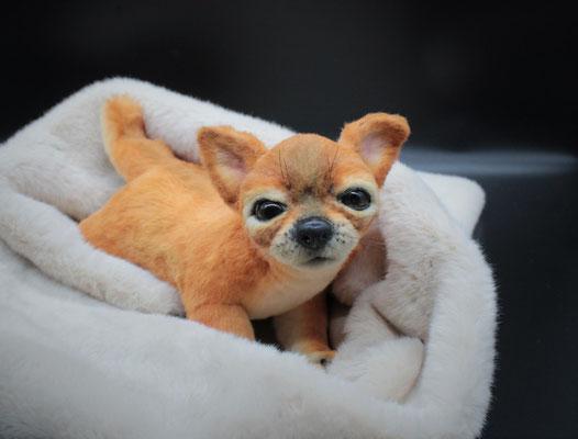 """Chihuahua """"Dino"""""""