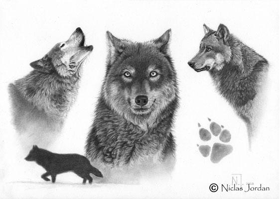 """""""Wolfsstudie"""" 2020"""