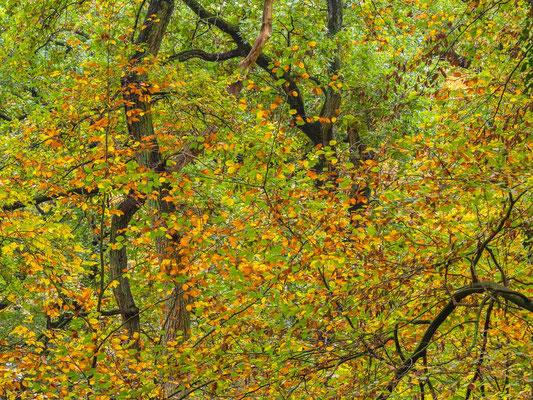 Herbstfarben im Düster Holz