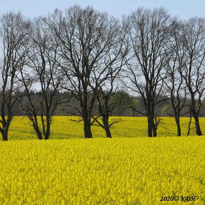 Frühling - 2