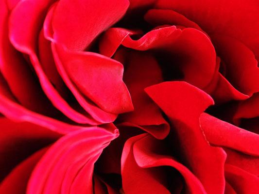 Naturformen Blüten