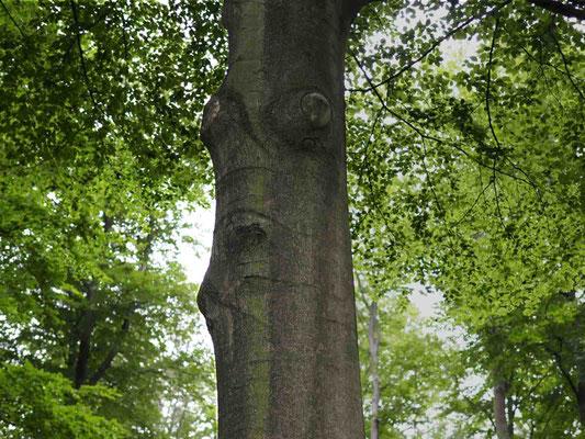 Der Waldwächter