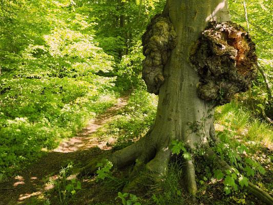 Der Wald kann so einladend sein