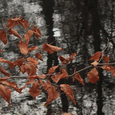 Blätter am See