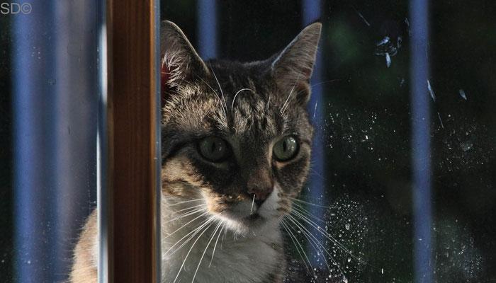Die Katze bleibt draußen ...