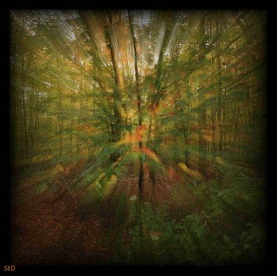 1sec Herbstwald