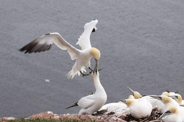 Präzise Landung beim Partner