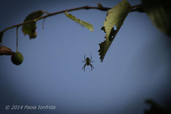 Spiderfriend