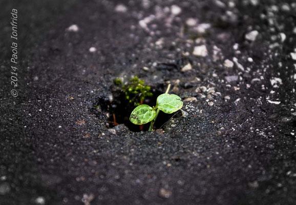 Natura vs cemento