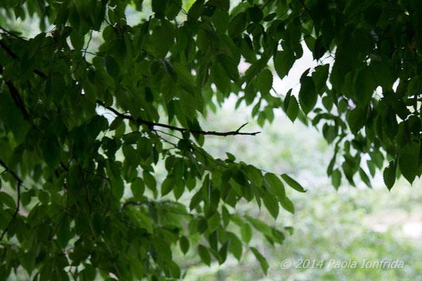Il nascondiglio verde