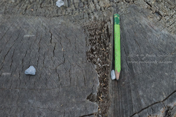 Green pencil on the wood